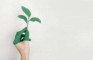 néobanque et écologie